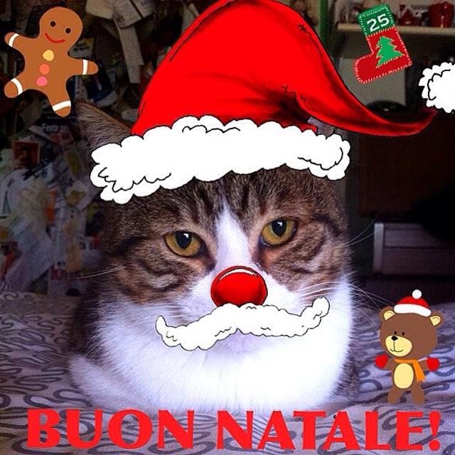 Buon Natale Buon Natale Canzone.Tanti Auguri Di Buon Natale Da Dobby E Joe Natta Canzoni